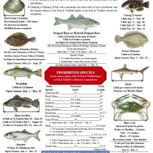 NJ marine recreational fishing regulations.